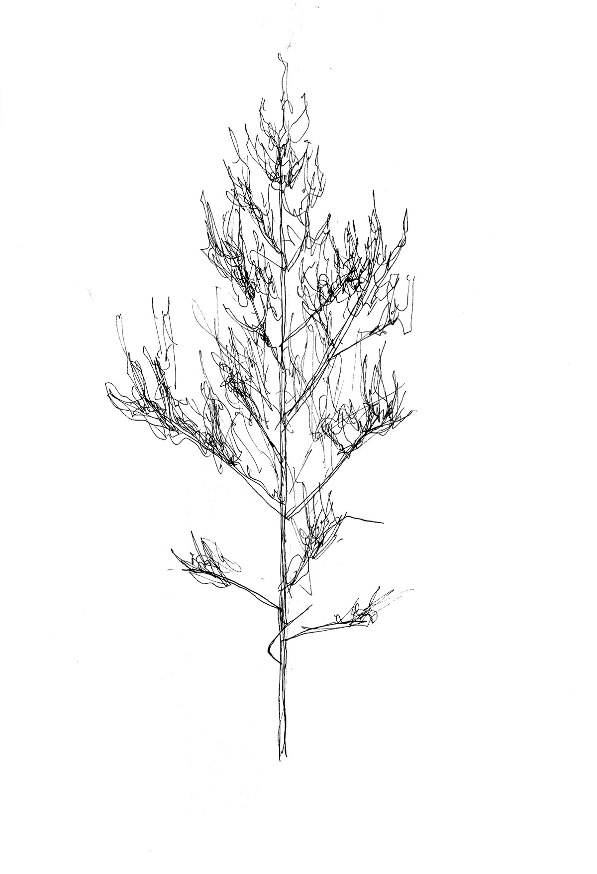 Tree  trees black and white pen and ink environmental Environmentalist Nature