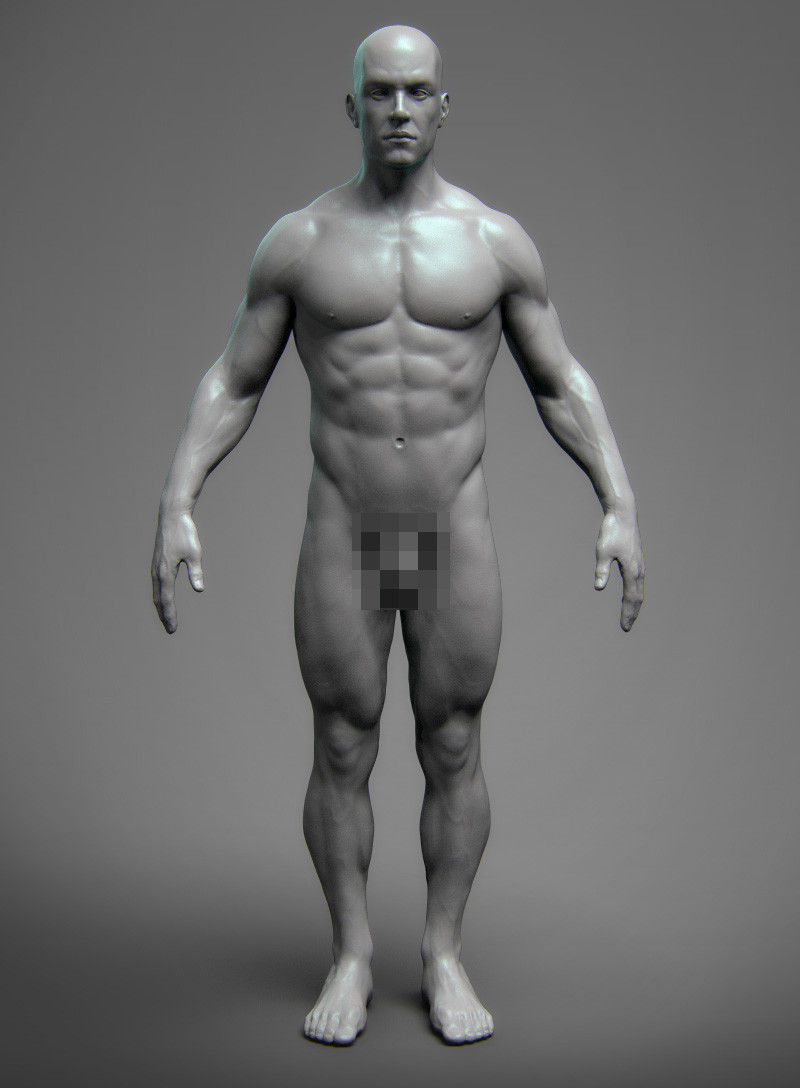 Anatomy Male Tool Reference for Artists ! on Behance