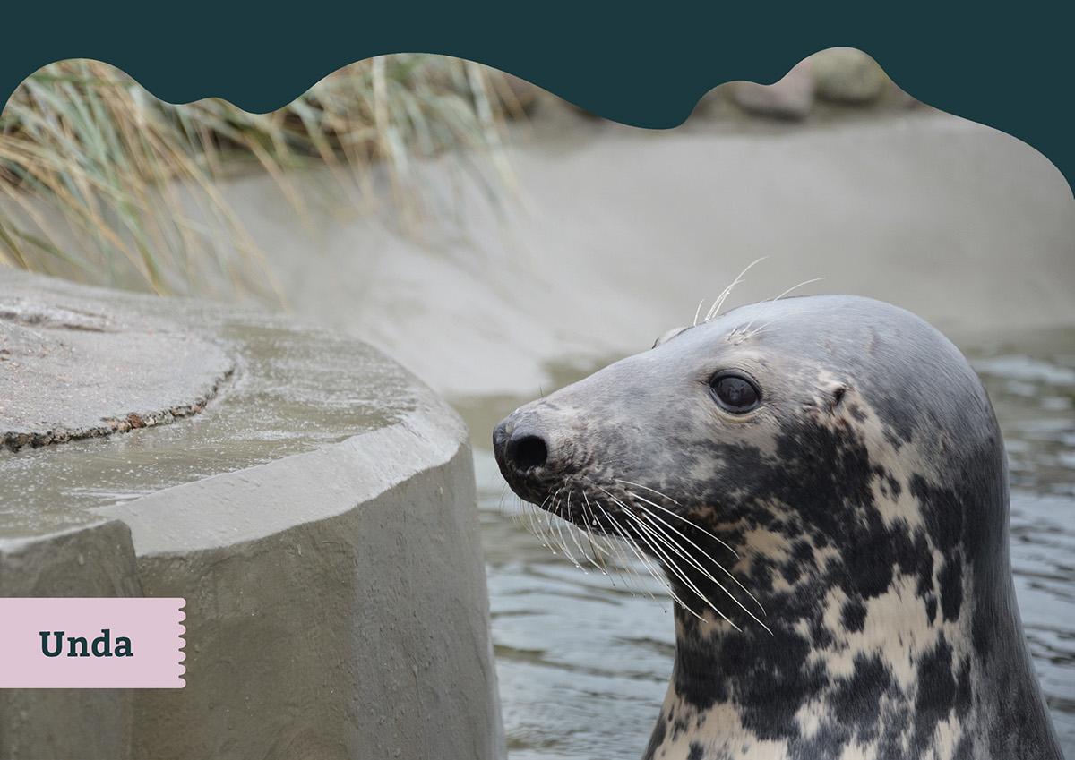 Seal Aquarium brand identity on Student Show