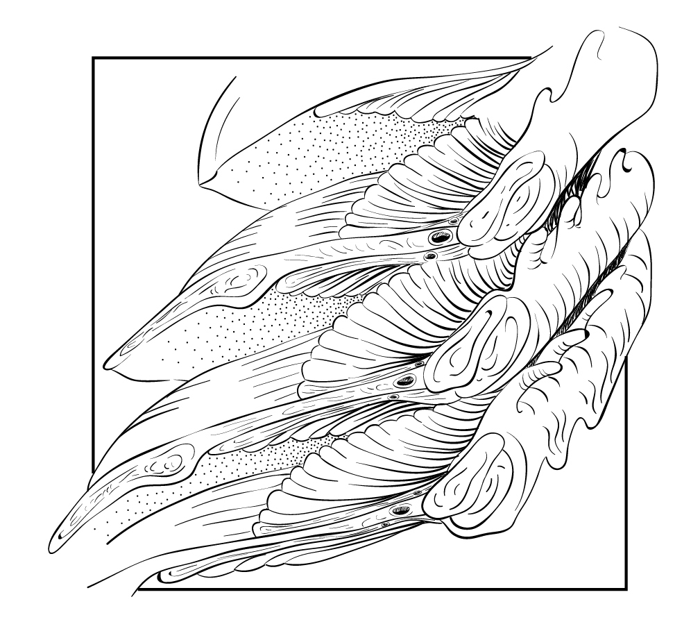 how to draw a dogfish