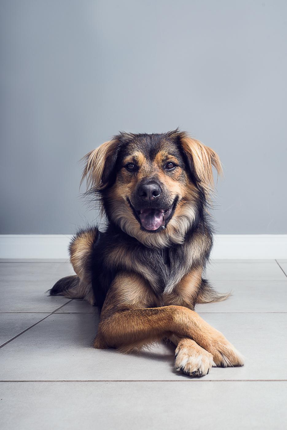 pet photography fotografia de estimação dogs adoption