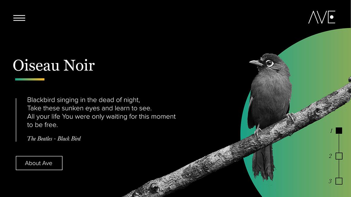 UI bird black noir Webdesign slider Interface minimal