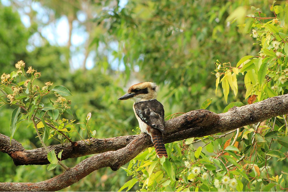 western australia birdlife birds wildlife Australia Flora and Fauna New Zealand volcano