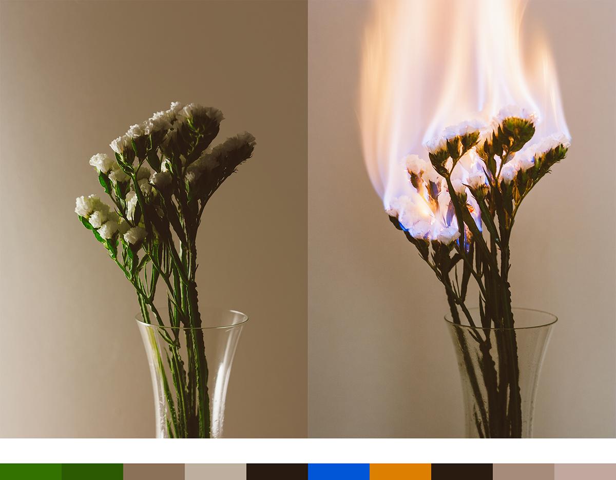 ozan mutlu dursun reaction flower fire burn burning Nature