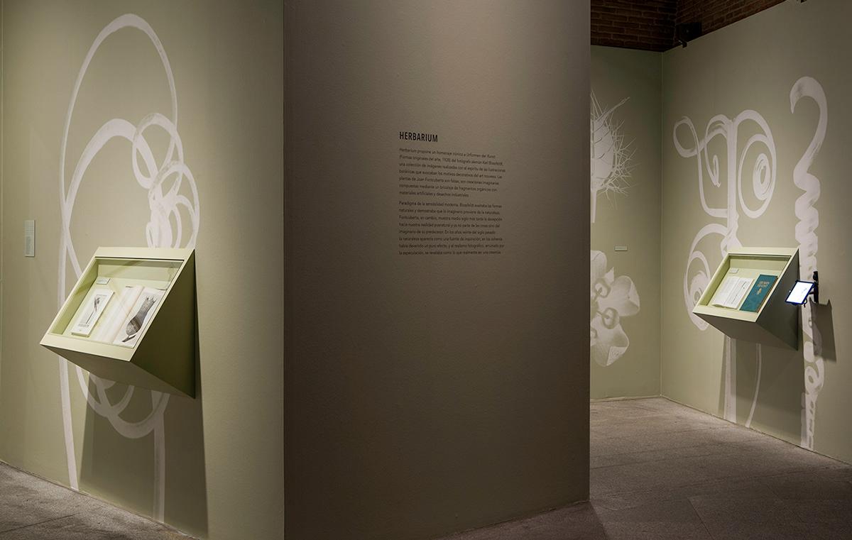 diseño de exposiciones Exhibition Design  Fotografia Photography  Photography exhibition