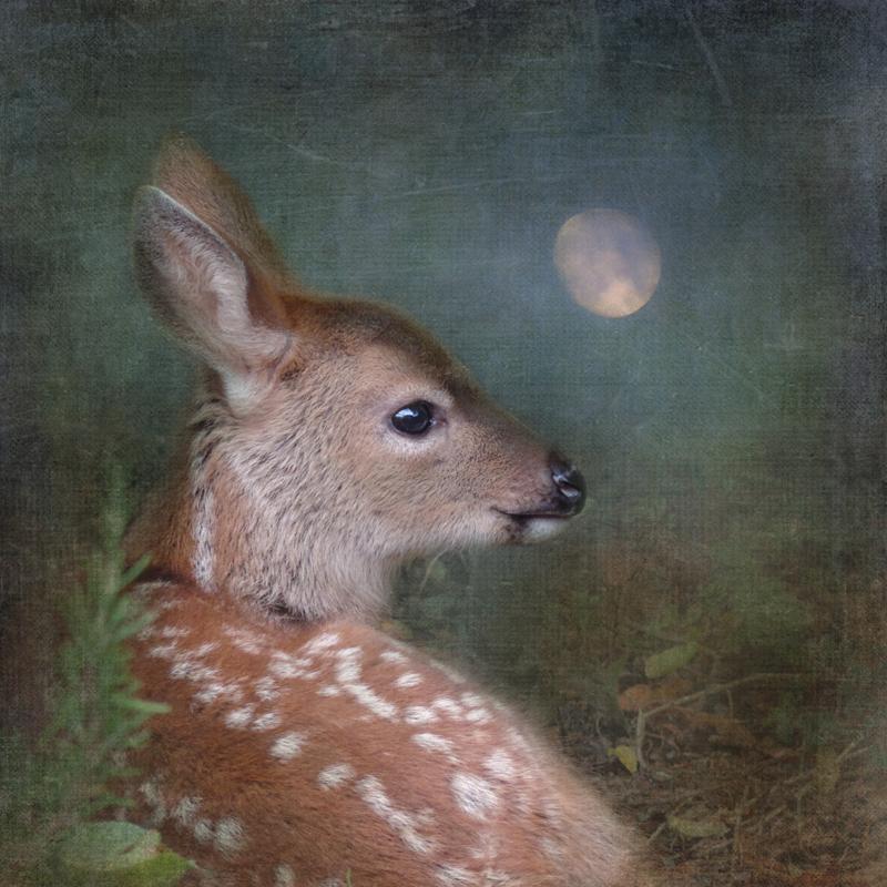 deer magic realism surreal wildlife animal portraits