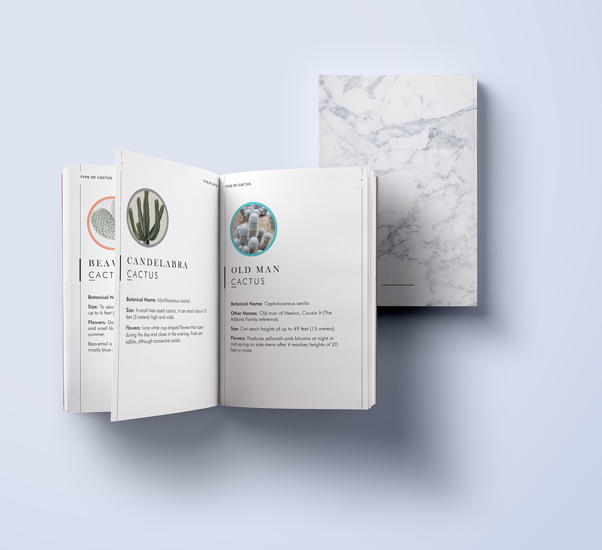 Hug Dealer - A guide to different type of cactus - on Behance