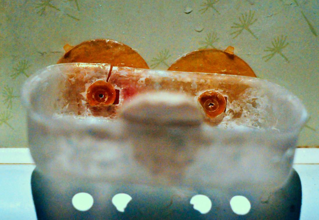 Image may contain: aquarium and indoor