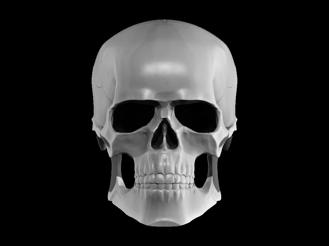 Image may contain: skull and mammal
