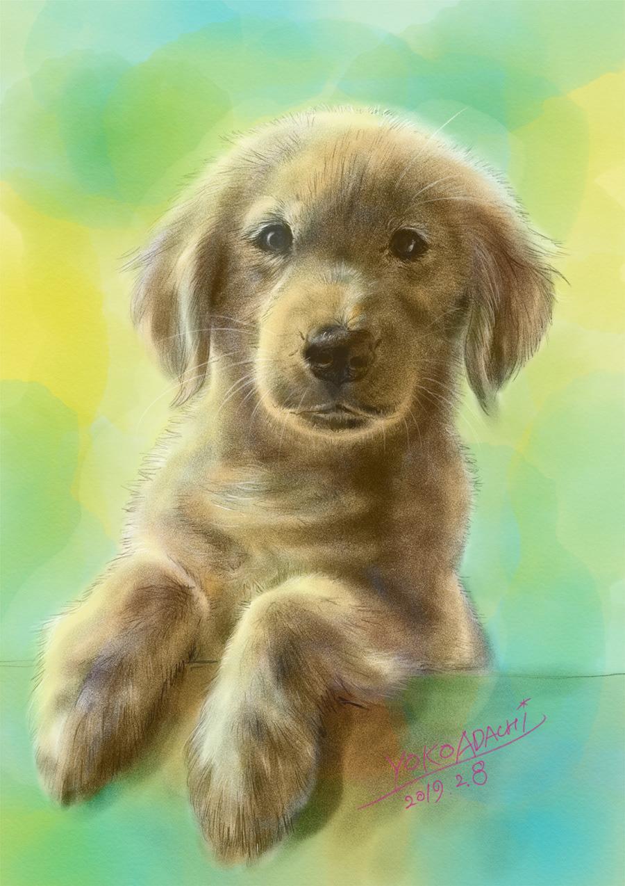 ILLUSTRATION  dogillustration GOLDENRETRIEVER Retriever dog doglover art Drawing  animal art animaldrawing