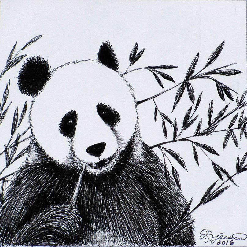 Панда на бамбуке картинки для срисовки