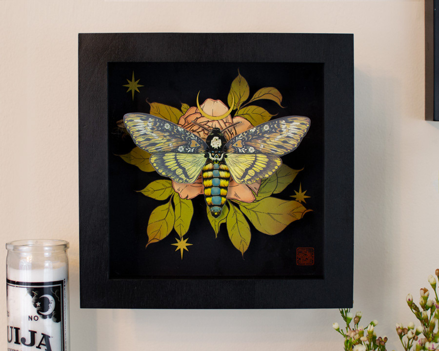 Image may contain: wall, butterfly and room