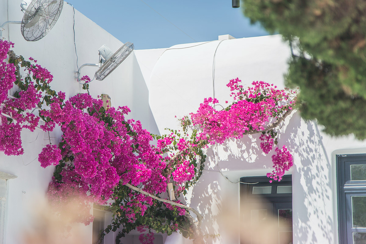 Photography  photojournalism  architecture athens Mykonos digital photography  Digital Art  canon 5d mkIII Greece street photography