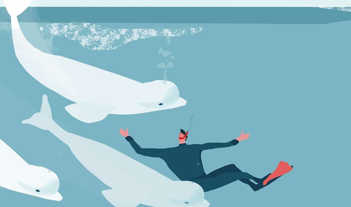 polar wilderness narrative series on behance