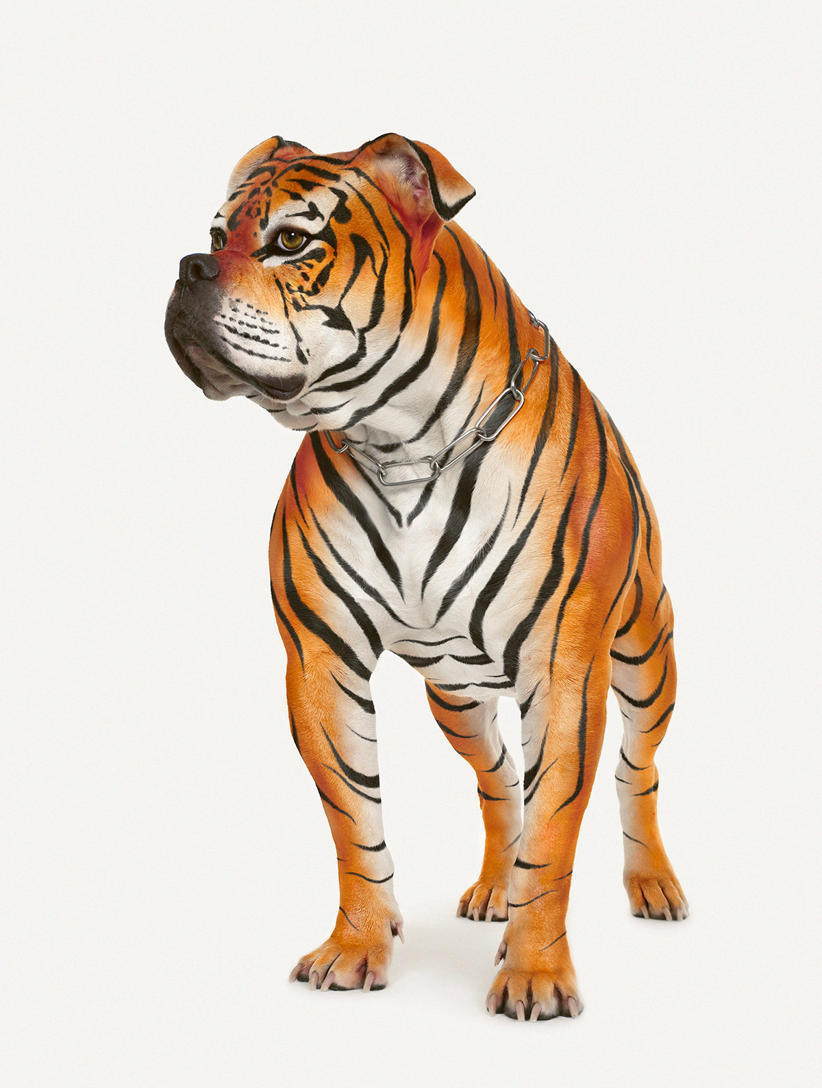 Adobe Portfolio Cristian Girotto retouch Photo Manipulation  photoshop Photo Montage Post Production campaign Save Our Tigers tigers