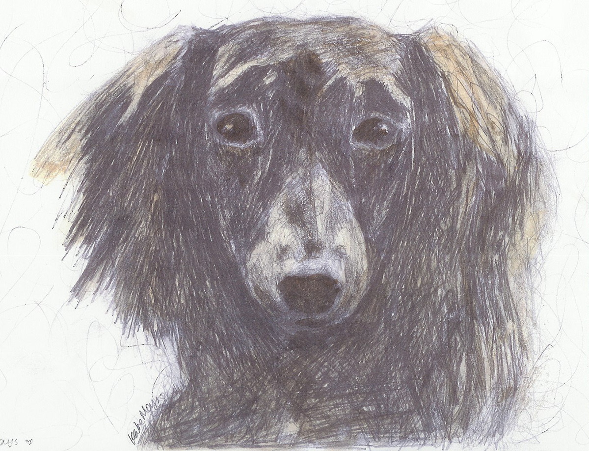 Image may contain: animal, sketch and mammal