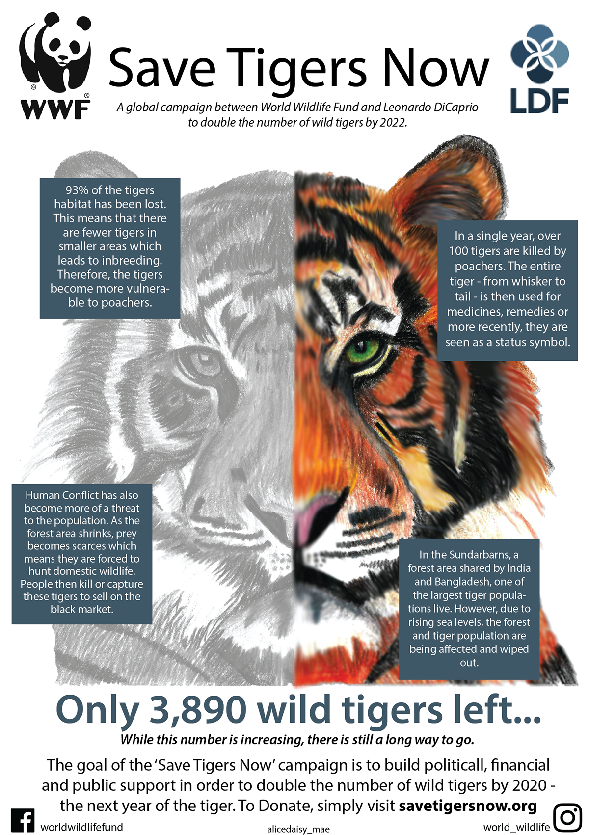 Save Tigers Now On Behance