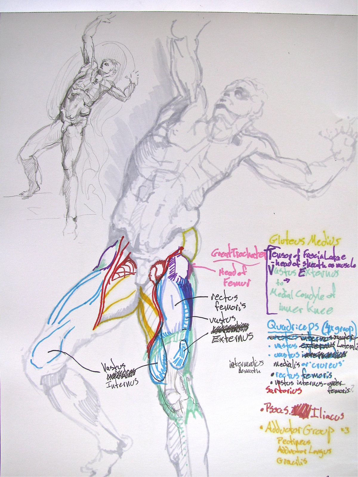 Anatomical Drawings on Behance