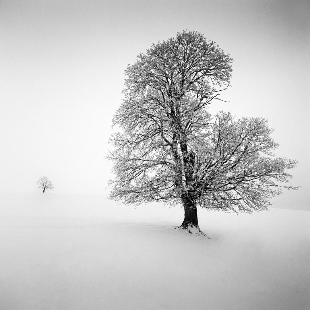 michaelschlegel monochrome long exposure minimal Minimalism Tree  black forest winter snow