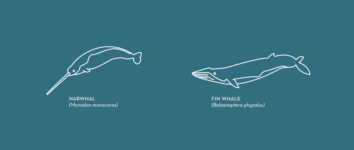 whales porpoises Dolphins orcas illustrations icons animals Free Graphics