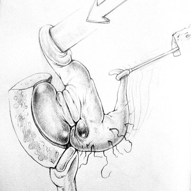 bird Slumpy sketch doodle photoshop pencil sketchbook book frog bear rabbit