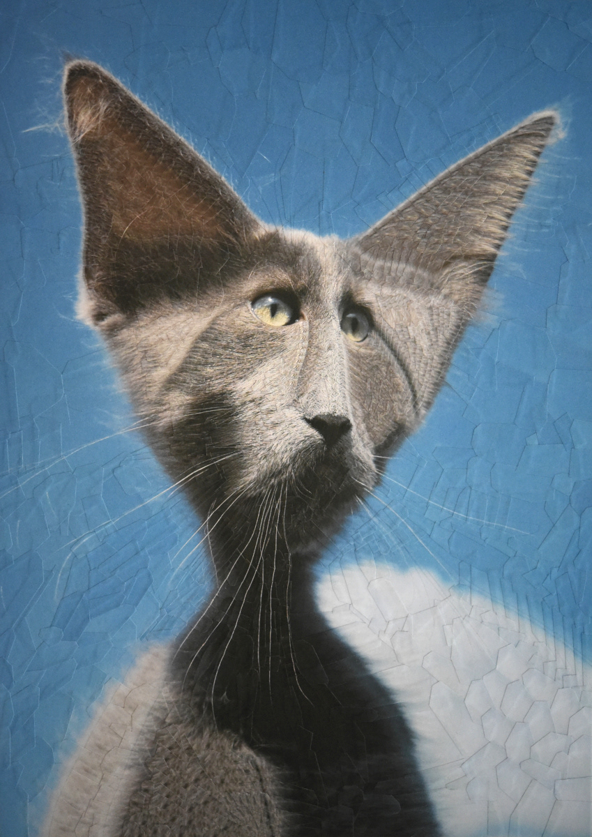 animal animals Cat cats collage dog dogs ILLUSTRATION  paper collage portraits