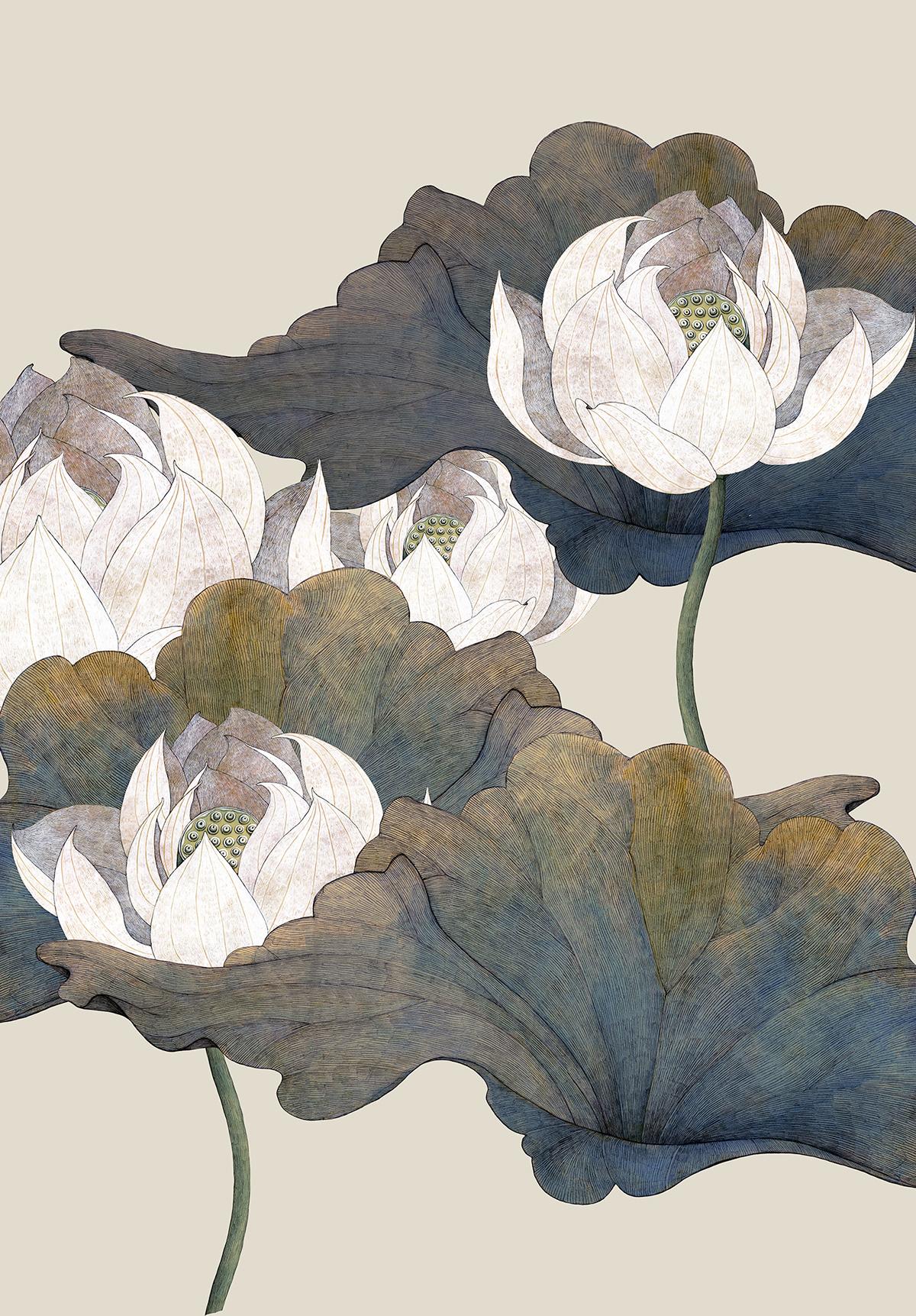 botany cd Drawing  Flowers ILLUSTRATION  japan Lotus music