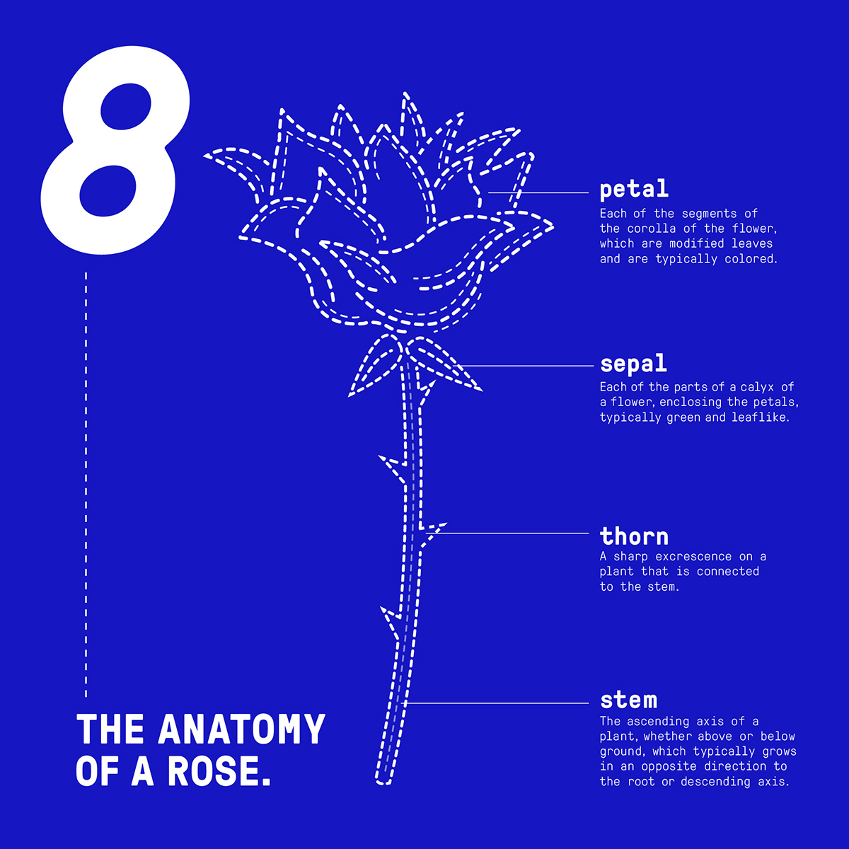 THE ANATOMY OF A ROSE on Behance