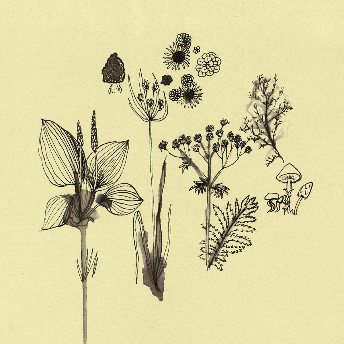 Abstract Plant Drawings By Kiki Bakowski On Behance