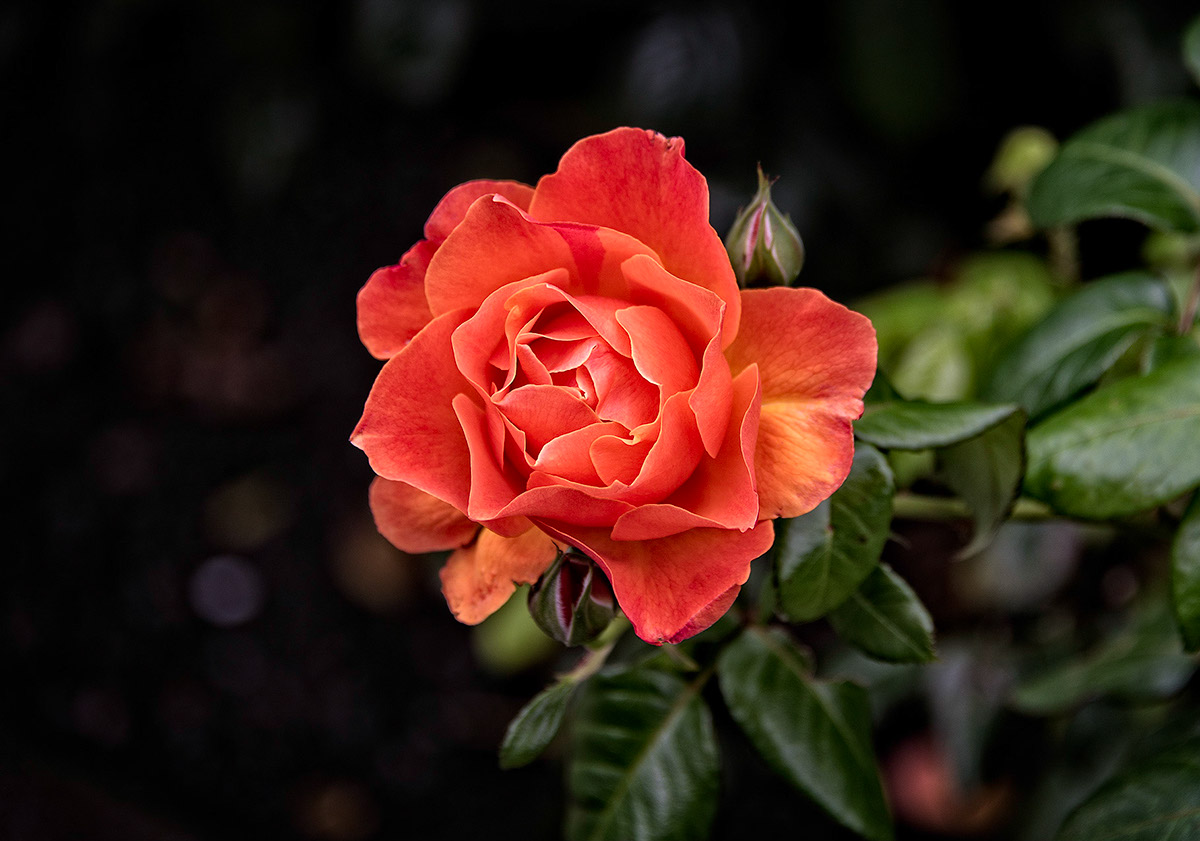 Adobe Portfolio floral Flowers