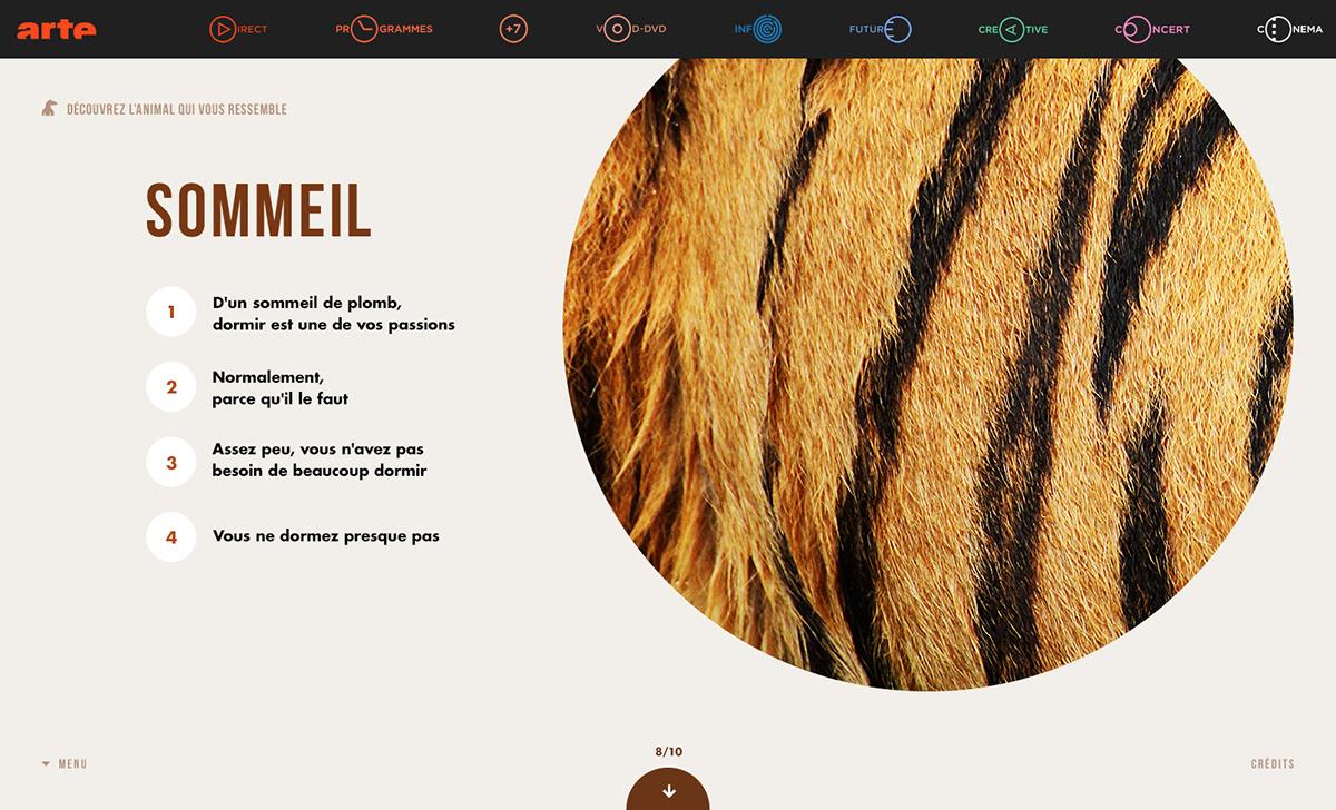 animals arte Website
