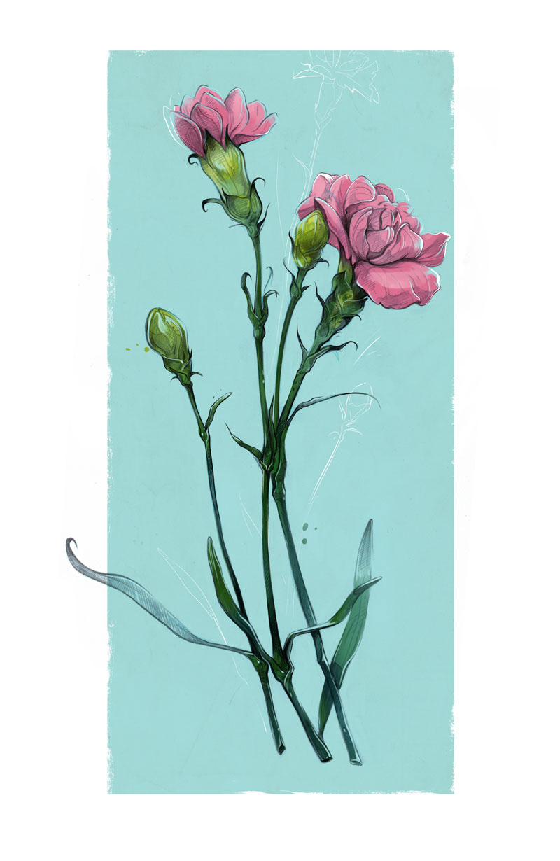 flower,carnation,peony,sketch,pencil,Plant