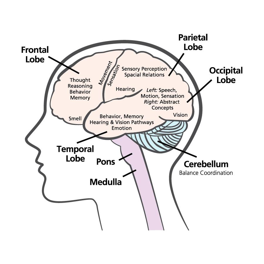 Brain Illustrations