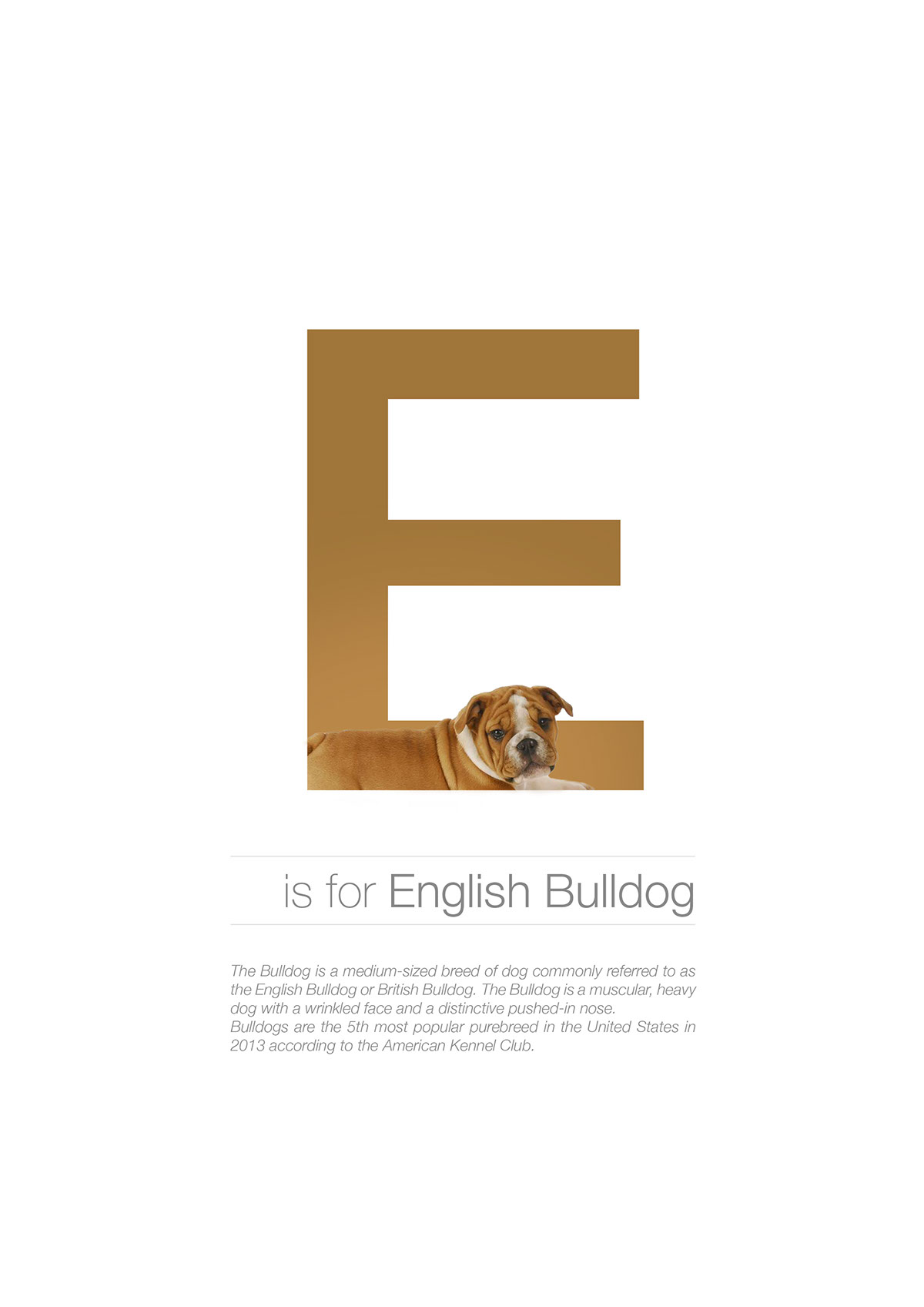 8 letter dog breeds alphabet breeds in alphabetical order on behance 20287 | ab8ef230194677.56176e3fa4cfc