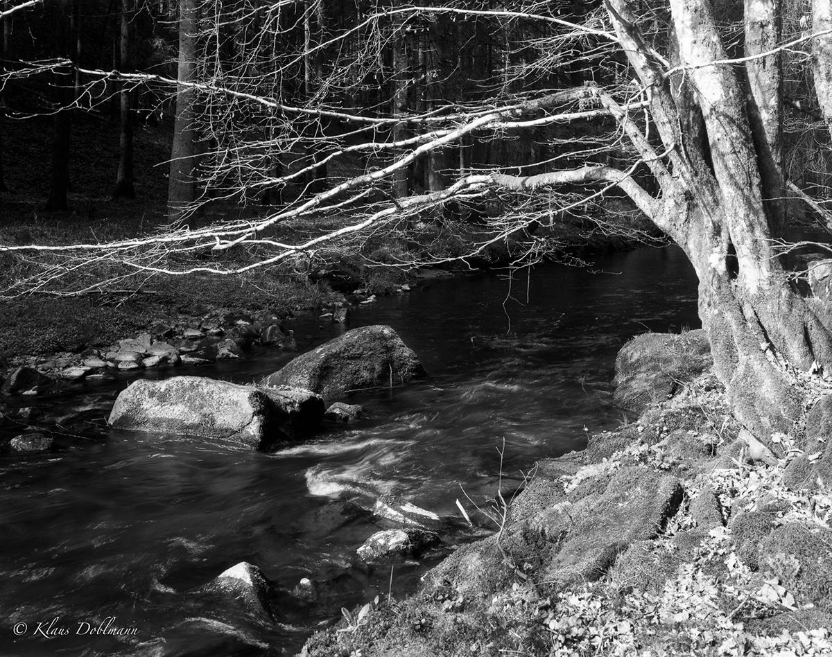 Adobe Portfolio large format film photography 4x5 black and white