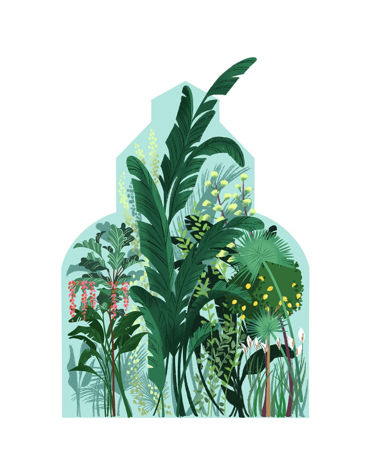 glasshouse greenhouse plants foliage greenery ILLUSTRATION  Digital Art  architecture Palm Tree Tropical