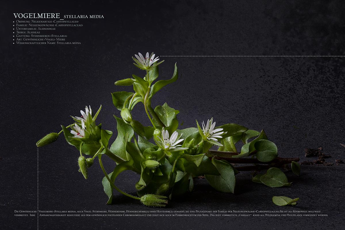 wald pflanzen plants stillife stilleben