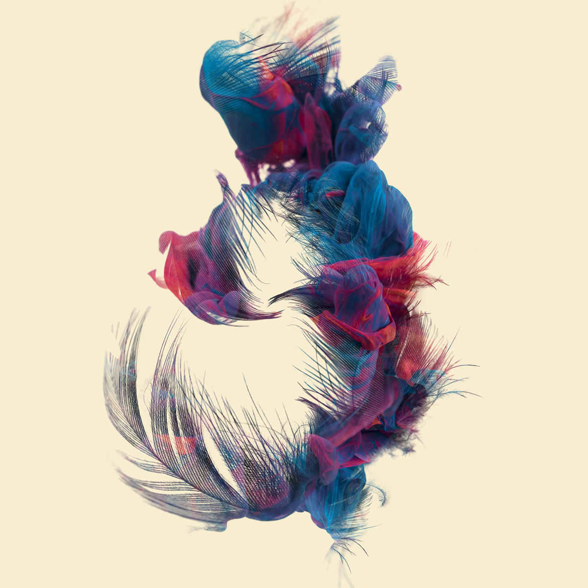 ink feather colored doubleexposure Exposure cameraraw ILLUSTRATION  Photography