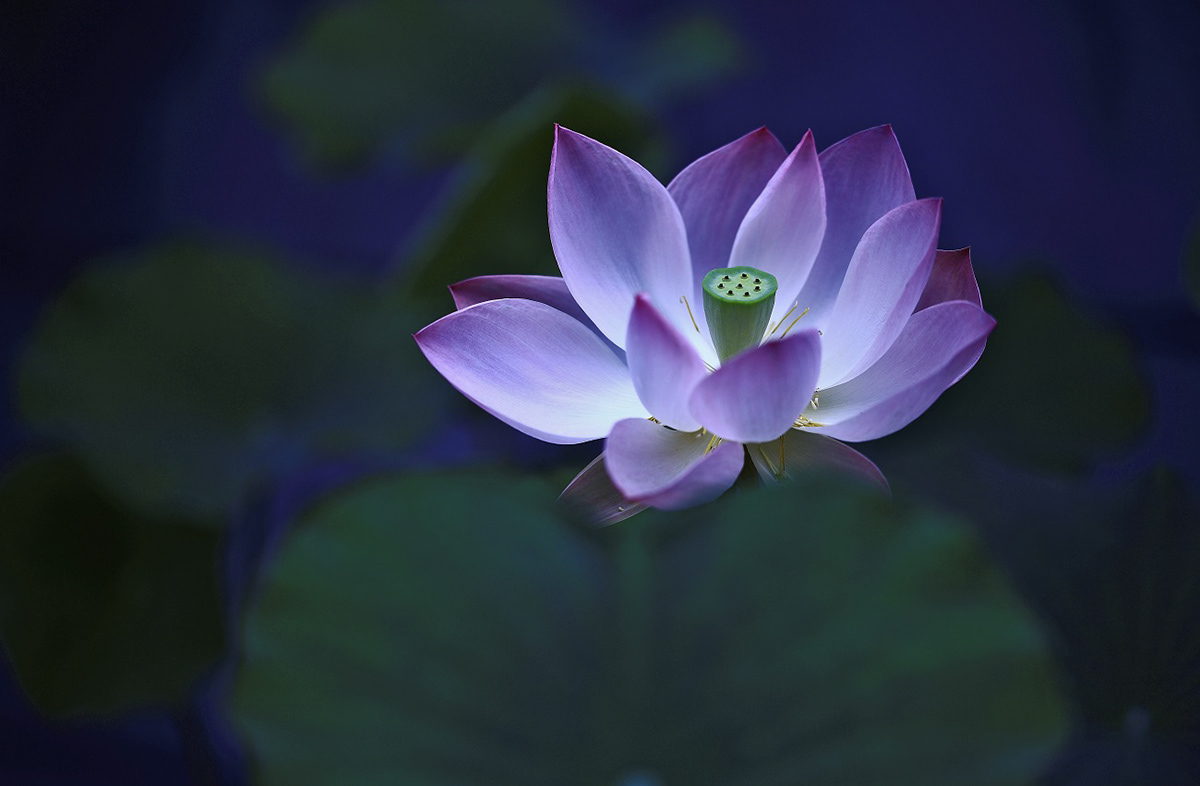 Poem of the lotus on behance when the lotus awakens izmirmasajfo