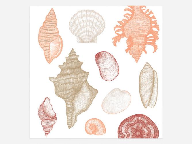 Image may contain: shellfish