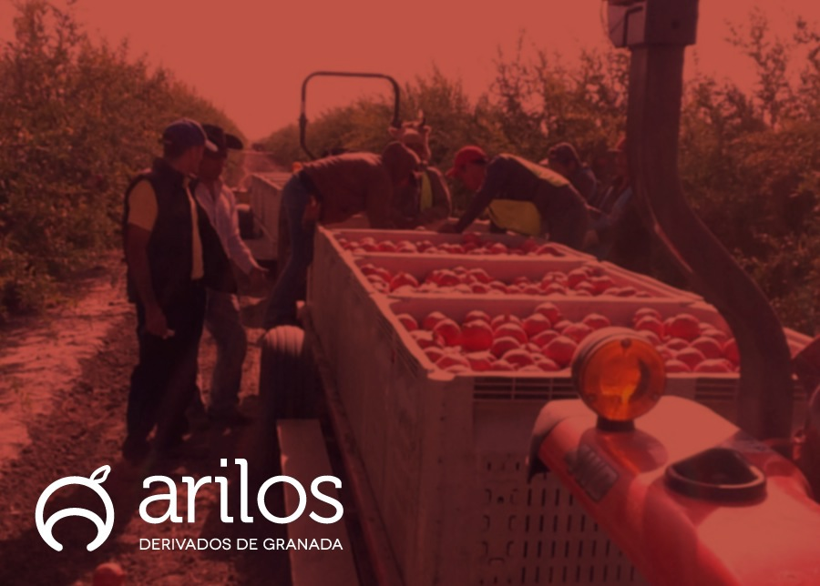 arilos pomegranate granada berries Logotipo  logo  brand  Mexico  jalisco   red organic marca  Stationary Alimentos Food