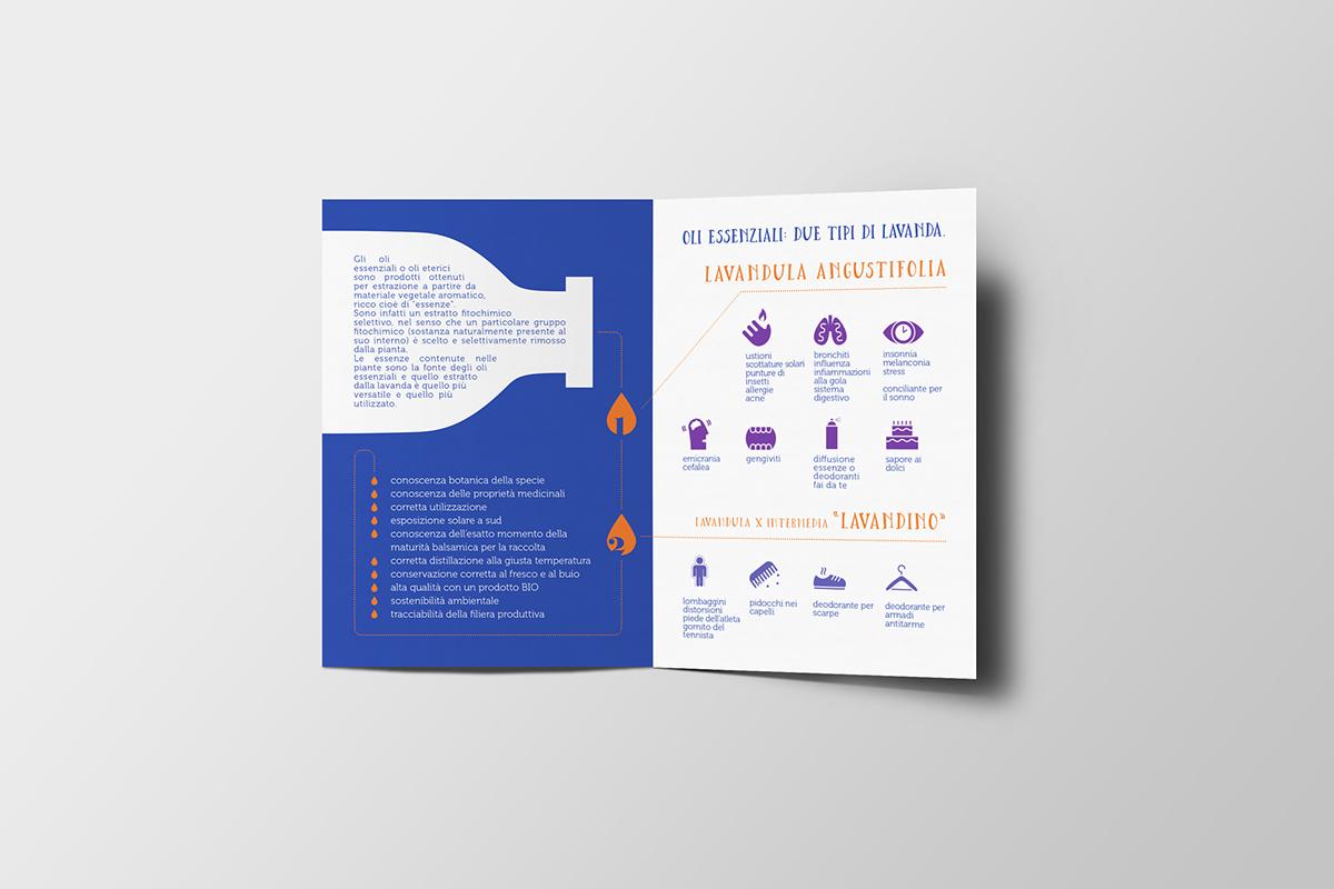 Piante Da Appartamento Ambiente Buio essential oils little handbook on behance