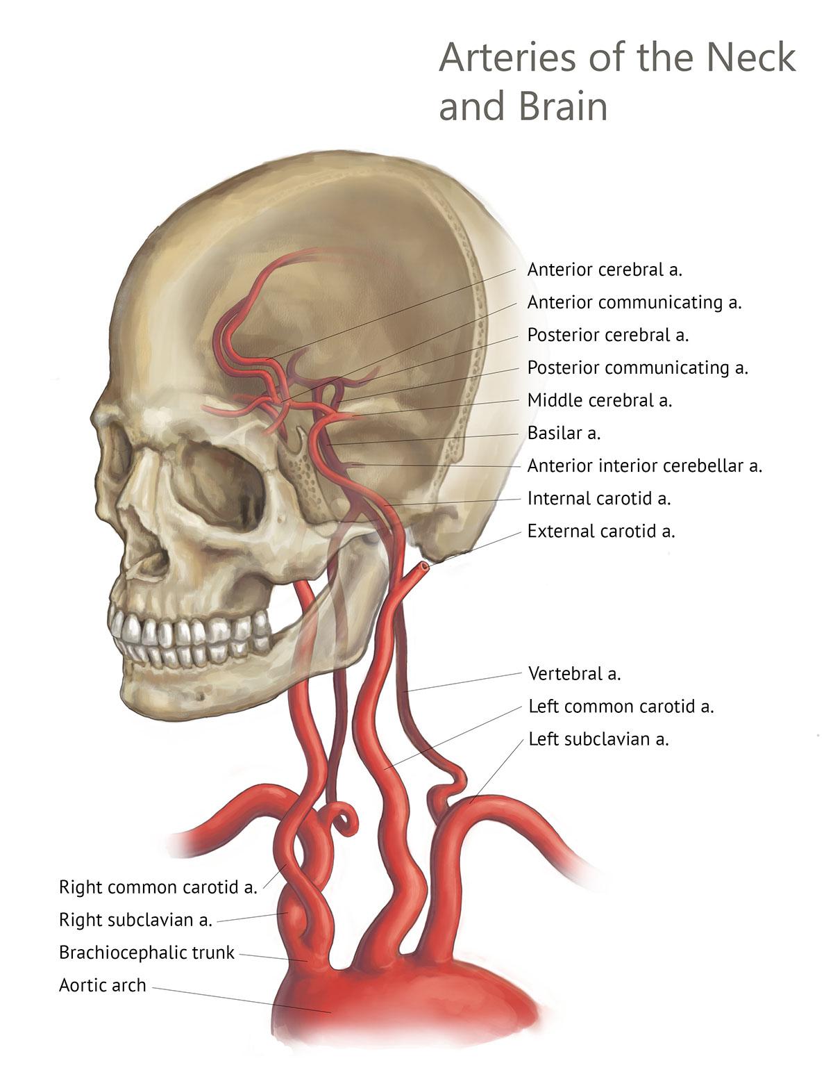Osirix Reference Anatomy