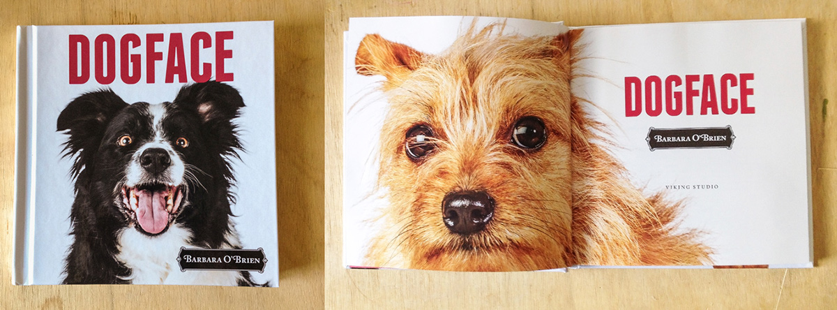 dogs faces headshot Expression pets animal