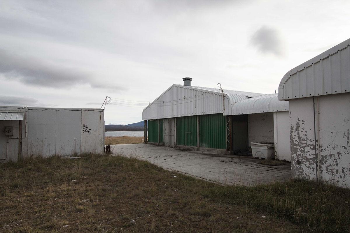 patagonia sheep downsouth