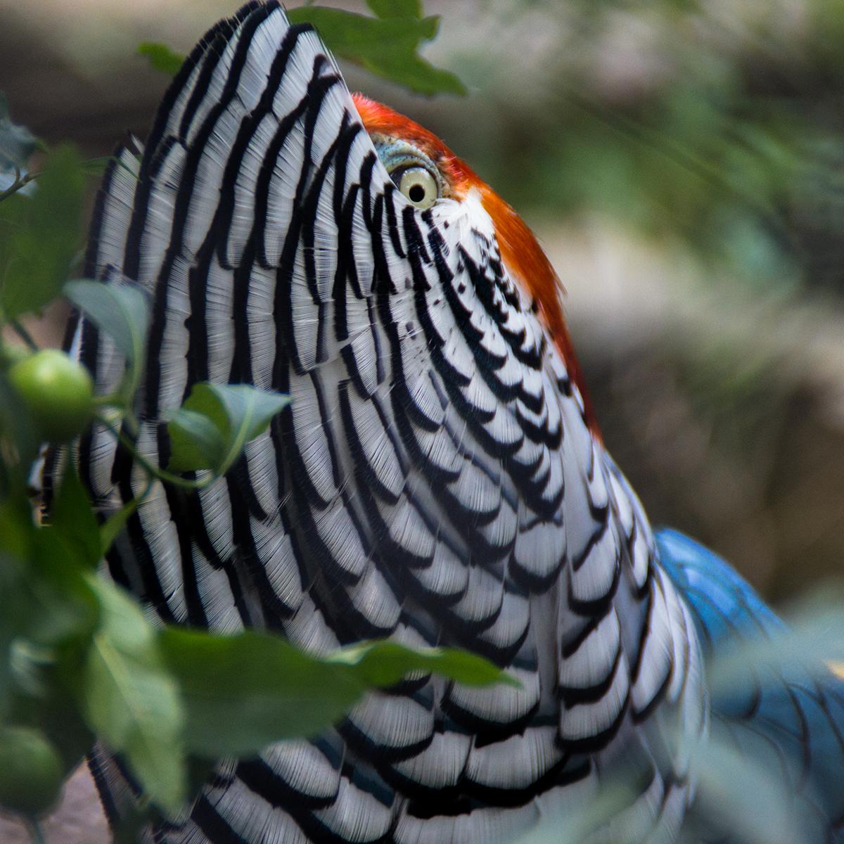 animal Nature naturephotography colour wild Travel