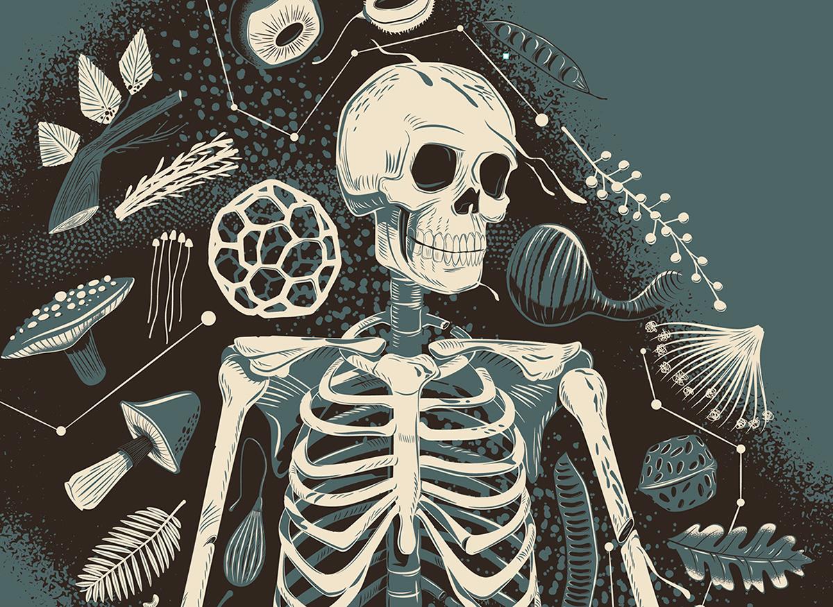 botanical print skeleton