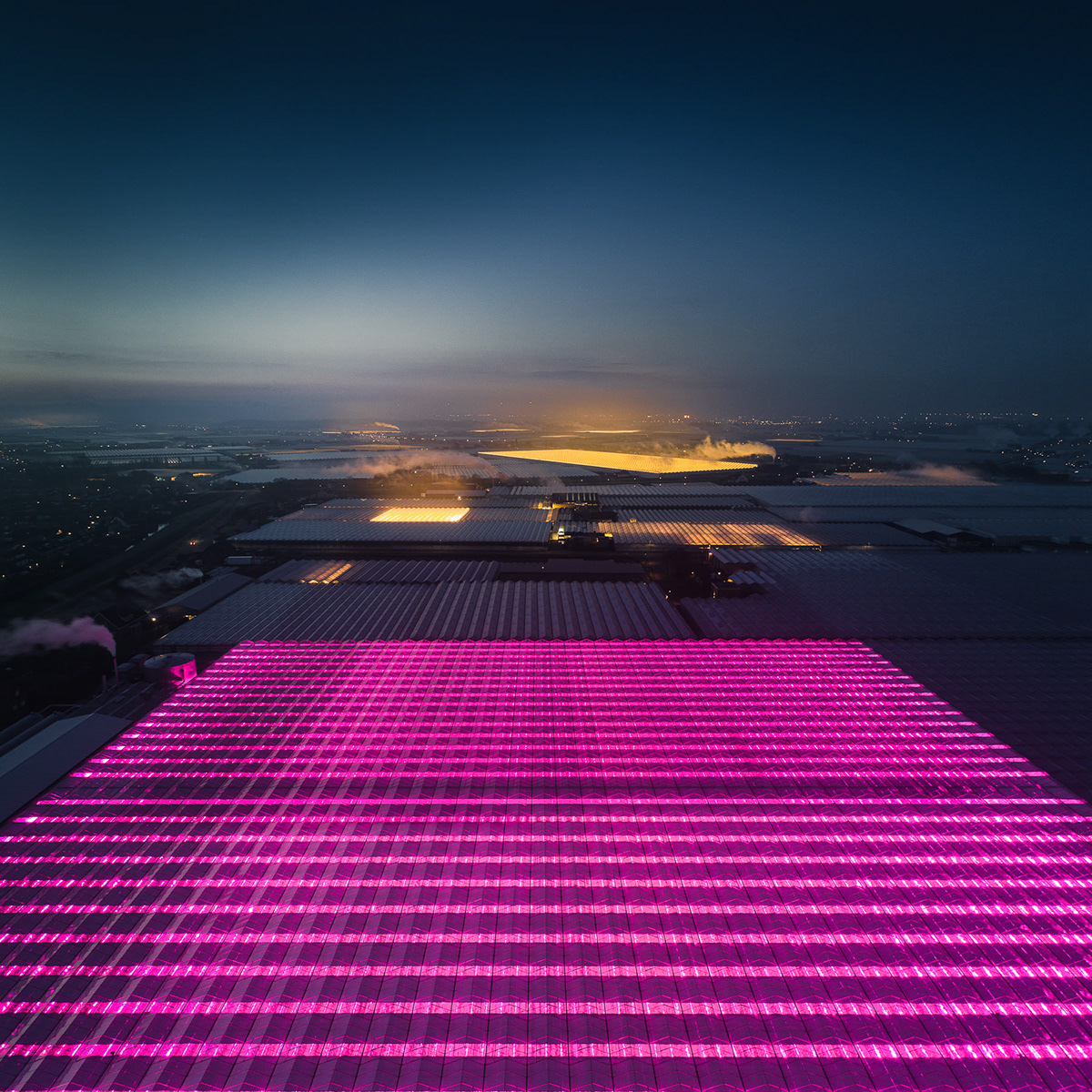 Aerial Netherlands fields greenhouse led light night cityscape architecture agriculture