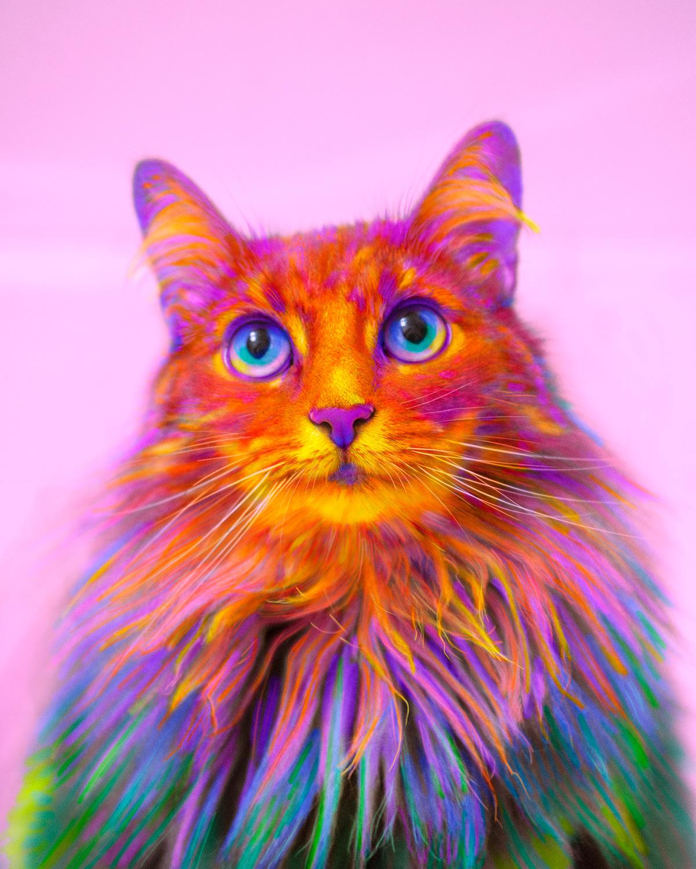 Картинки с радужными котами