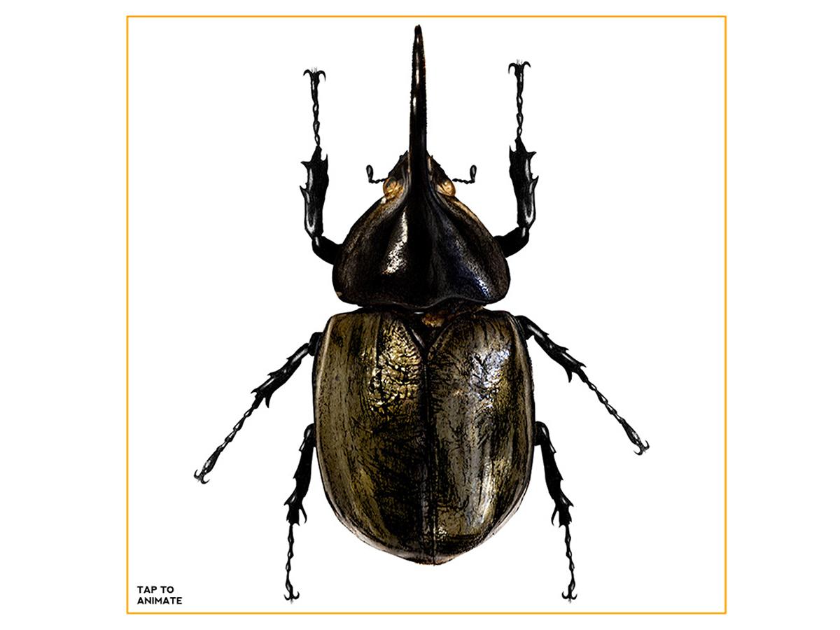 Beetles - An interactive/animated eBook on Behance
